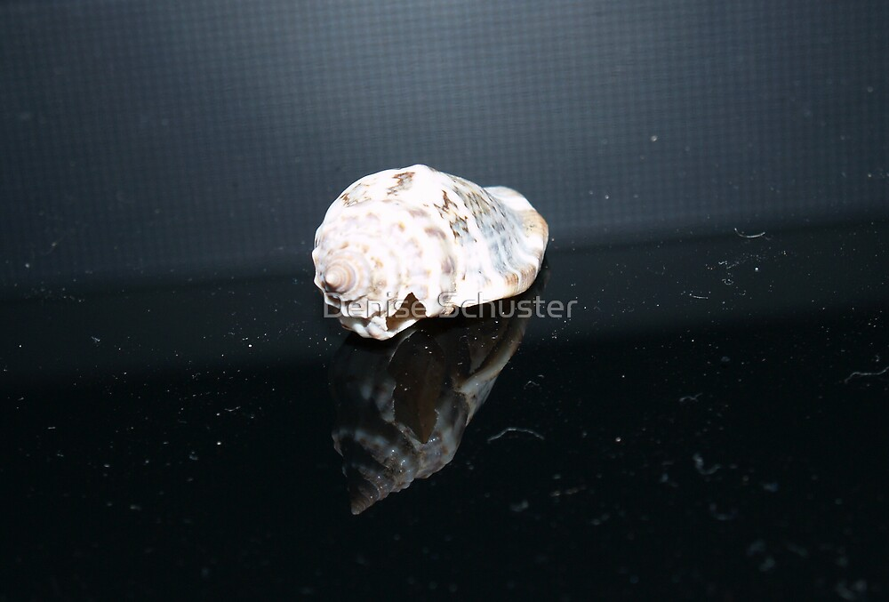 A Sea Shell Reflection by Denise Wolff