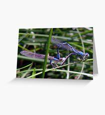 Dragon Mates... Greeting Card