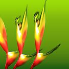 Heliconia dance by lensbaby