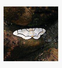 JAPANESE MOTH Photographic Print