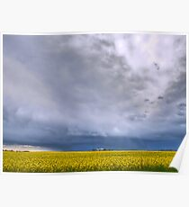 Canola on Stormy Plain Poster