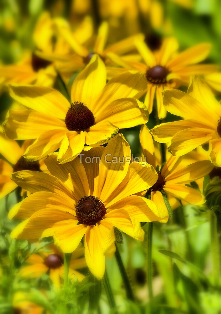 Bright Yellow Flowers by Tom Causley