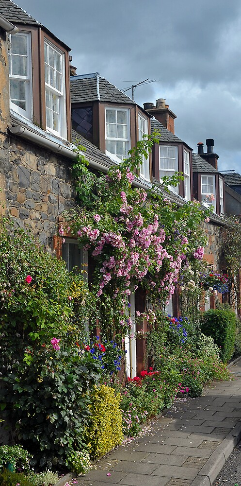 Cottages covered in Roses by photobymdavey