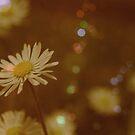 daisyllusioned by 8Delirium