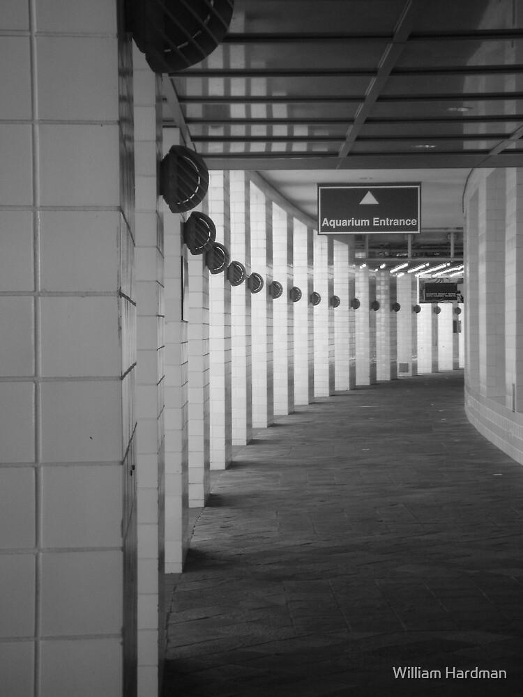 Hallway to New Orleans by William Hardman