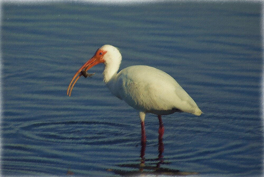 Ibis in Oil by Michael Wolf