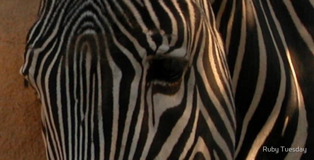 Zebra by Ruby Tuesday