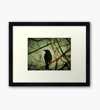 The Watcher Framed Print