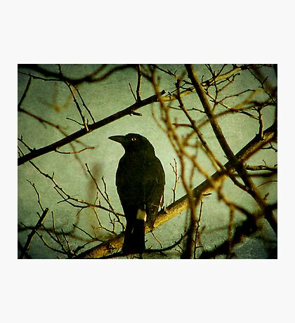 The Watcher Photographic Print