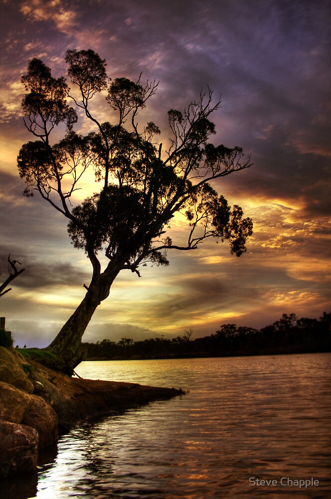River Redgum Sunset by Steve Chapple