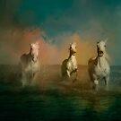 Three White Horses  by WickedLola