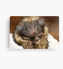 Hedgehog with Big Ears Canvas Print