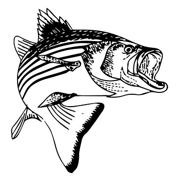 Striped Bass by OctopusOveralls