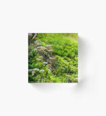 small toxic mushrooms in the moss closeup Acrylic Block