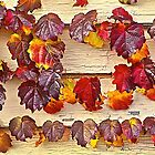 Autumn Leaves on Weathered Siding by John Butler