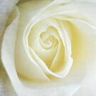 White swirl - rose by Karen  Betts