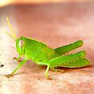 MR GREEN HOPPER by Squealia
