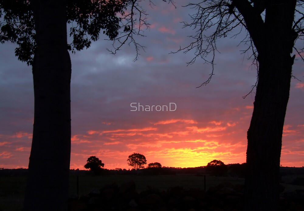 August Sunset by SharonD