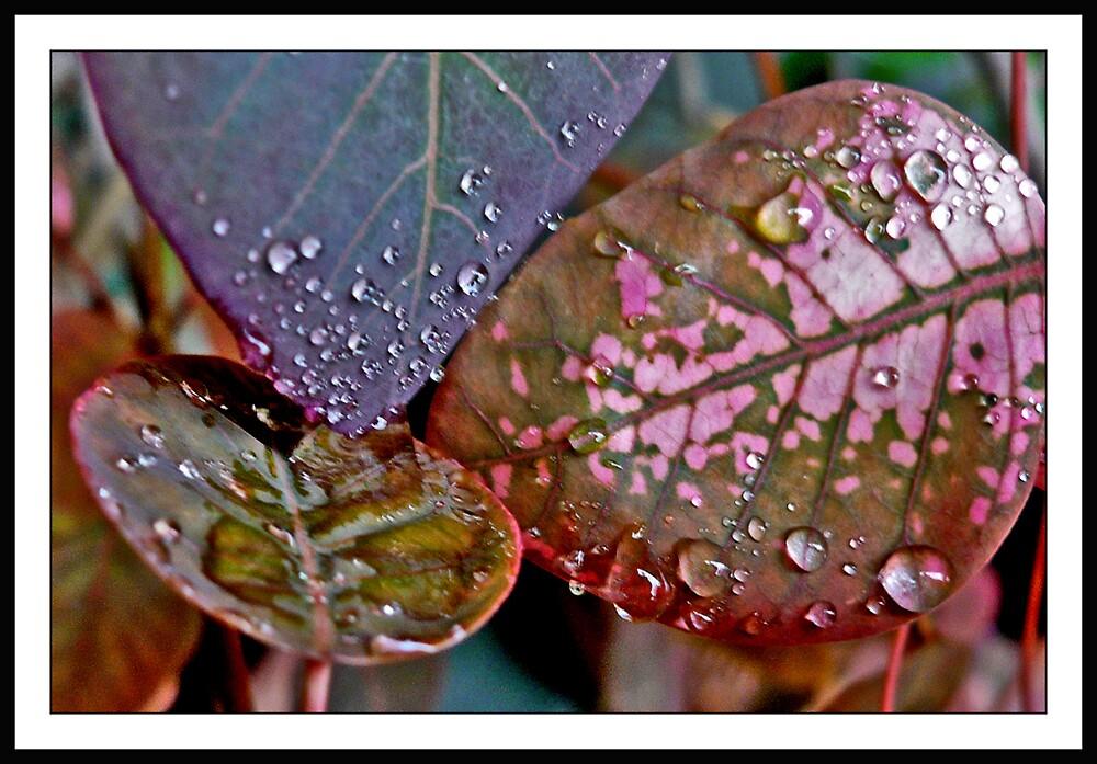Rain after 01 by satwant
