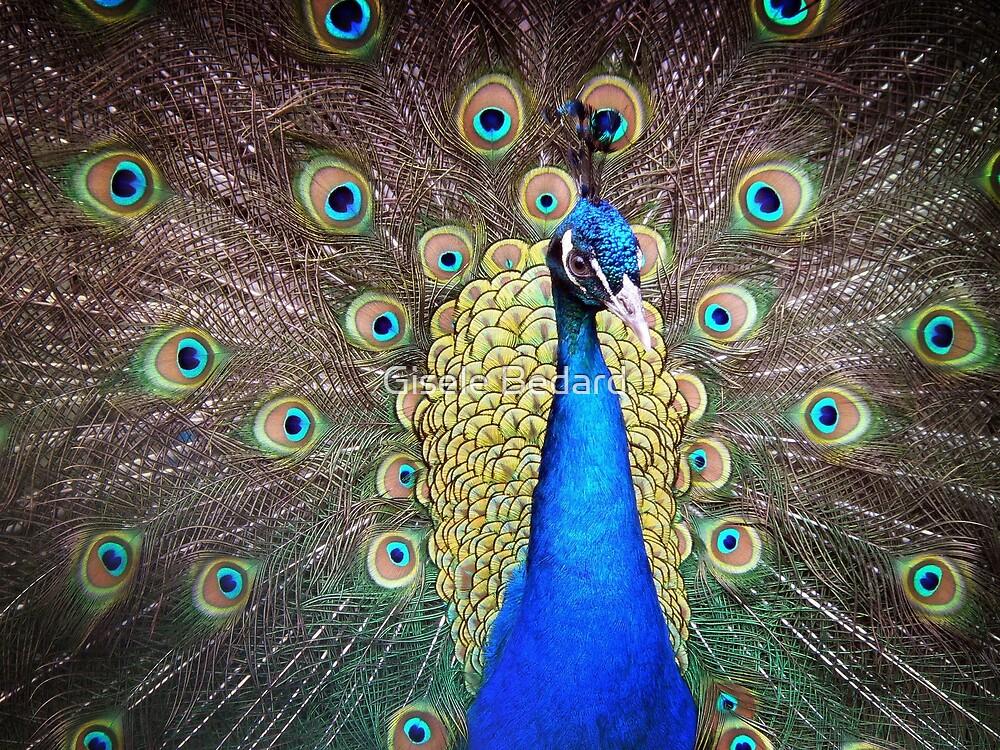 The Magic Bird by Gisele Bedard