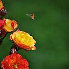 Take Flight by Jennifer Vickers