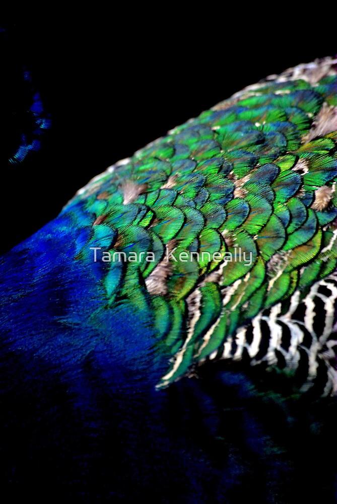 Peacock III by Tamara  Kenneally