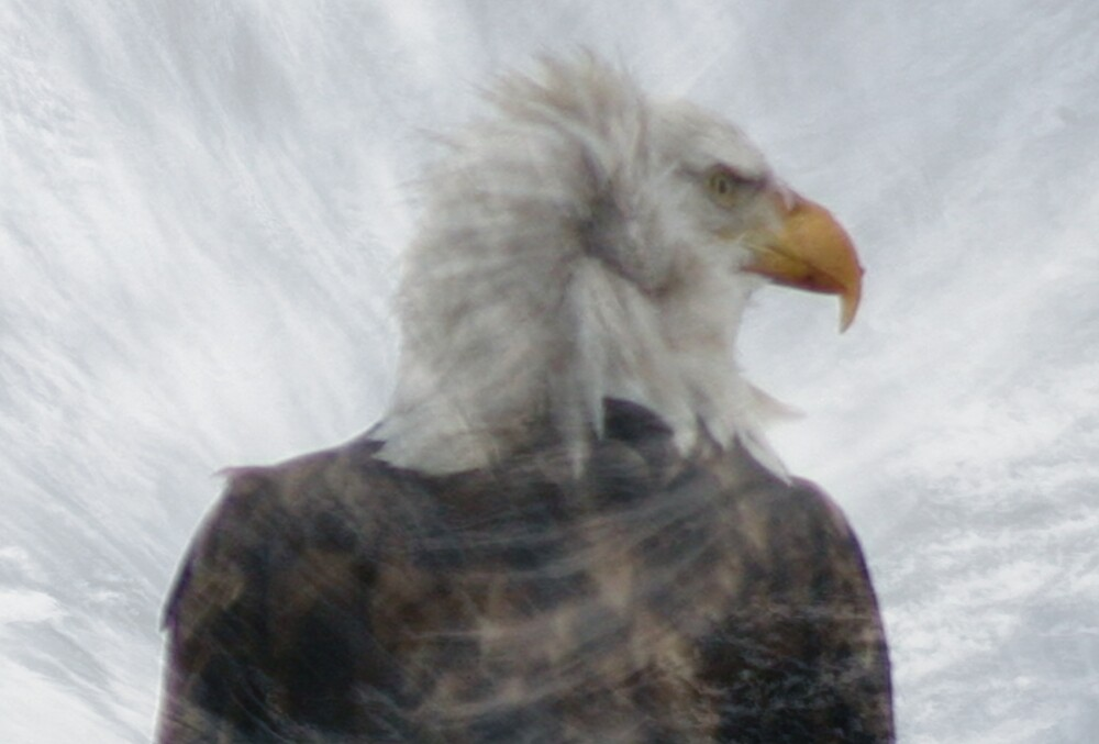 The Face of Freedom! by Patricia Montgomery