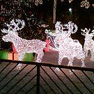 Reindeer at Christmas by christinawalker