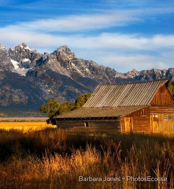 The Moulton Barn.  Mormon Row.  Jackson, Wyoming. USA. by Barbara  Jones ~ PhotosEcosse