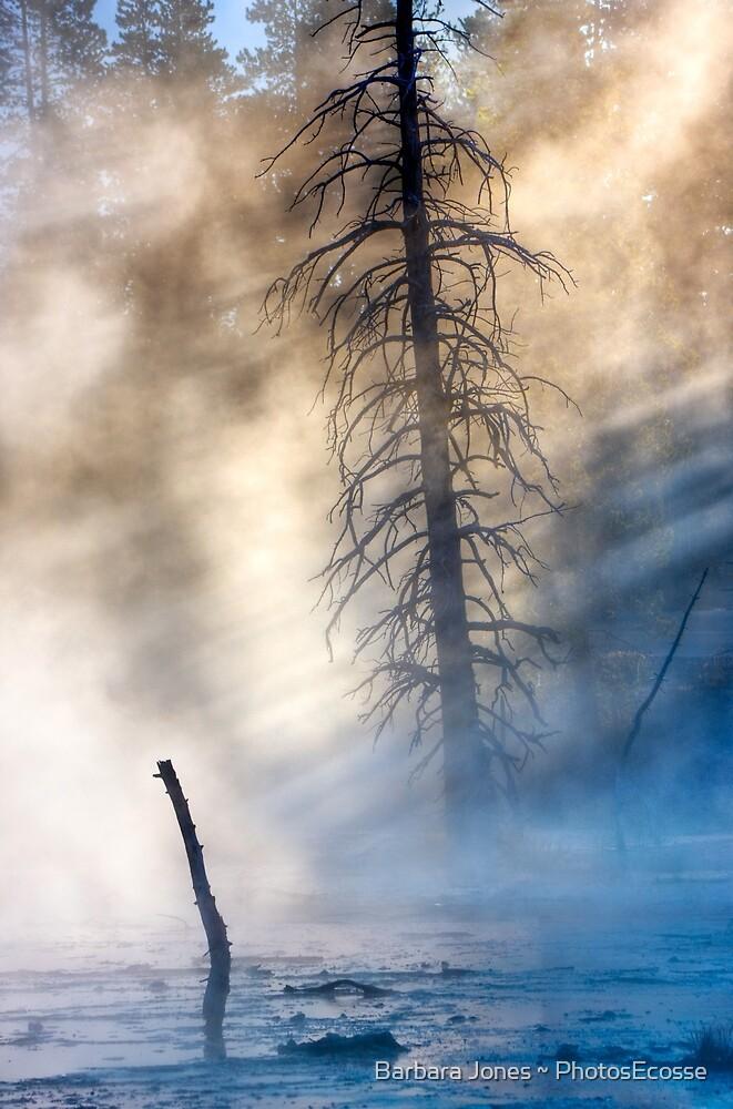 Fountain Paintpots, Yellowstone National Park, USA. by Barbara  Jones ~ PhotosEcosse