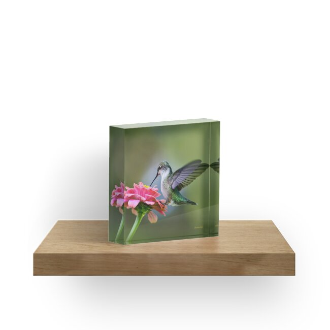 Hummingbird Floral Square by Christina Rollo