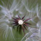 wind star by liak