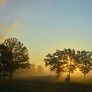 Misty Sunrise With Trees by farmbrough