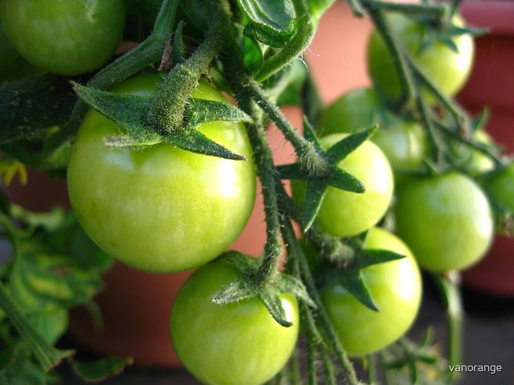 Green Tomatoes by vanorange