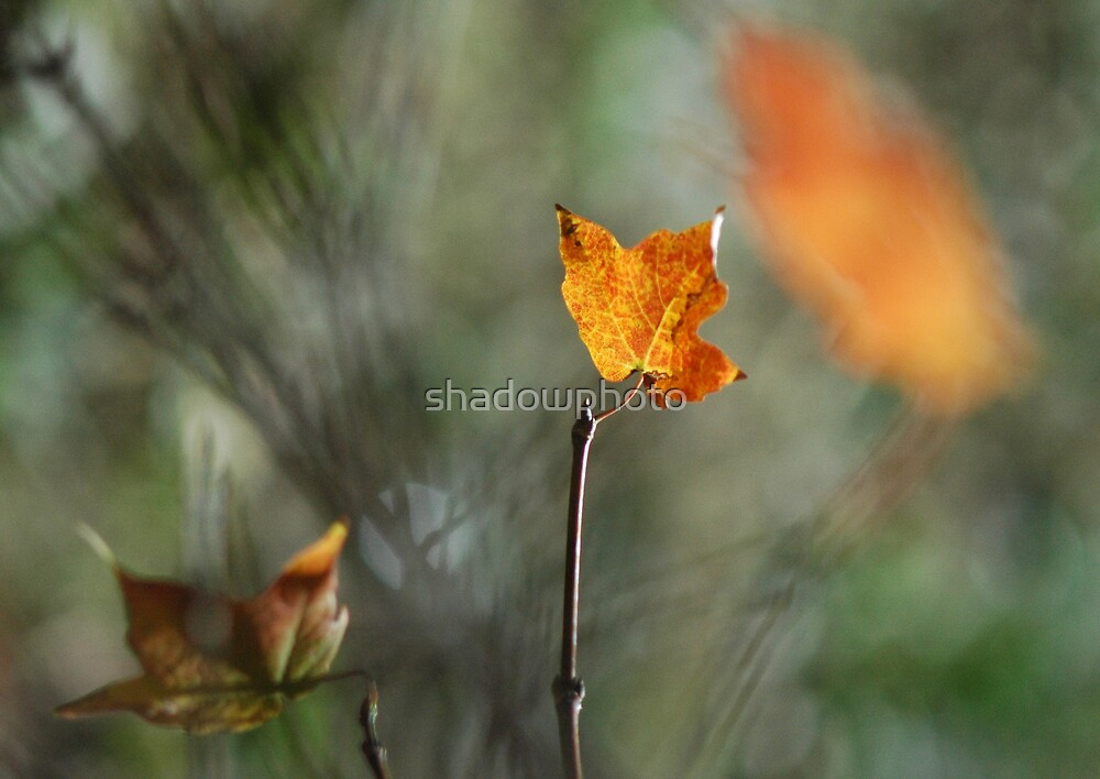 Autumn by shadowphoto
