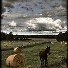 Horse in a Hayfield in Ontario by Wayne King