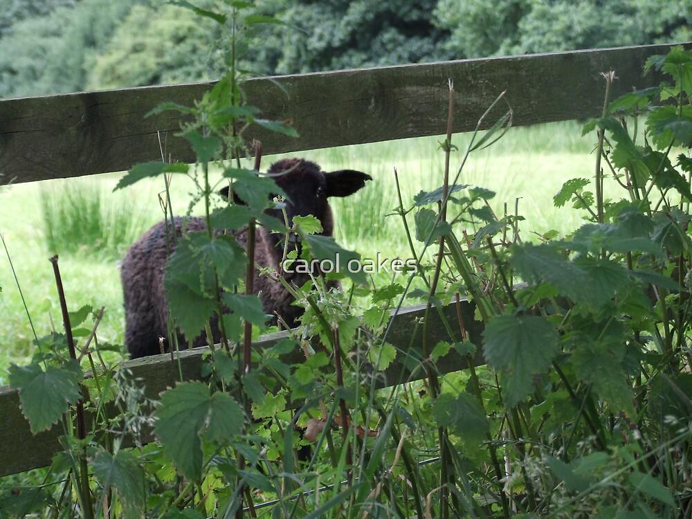 peek a boo by carol oakes