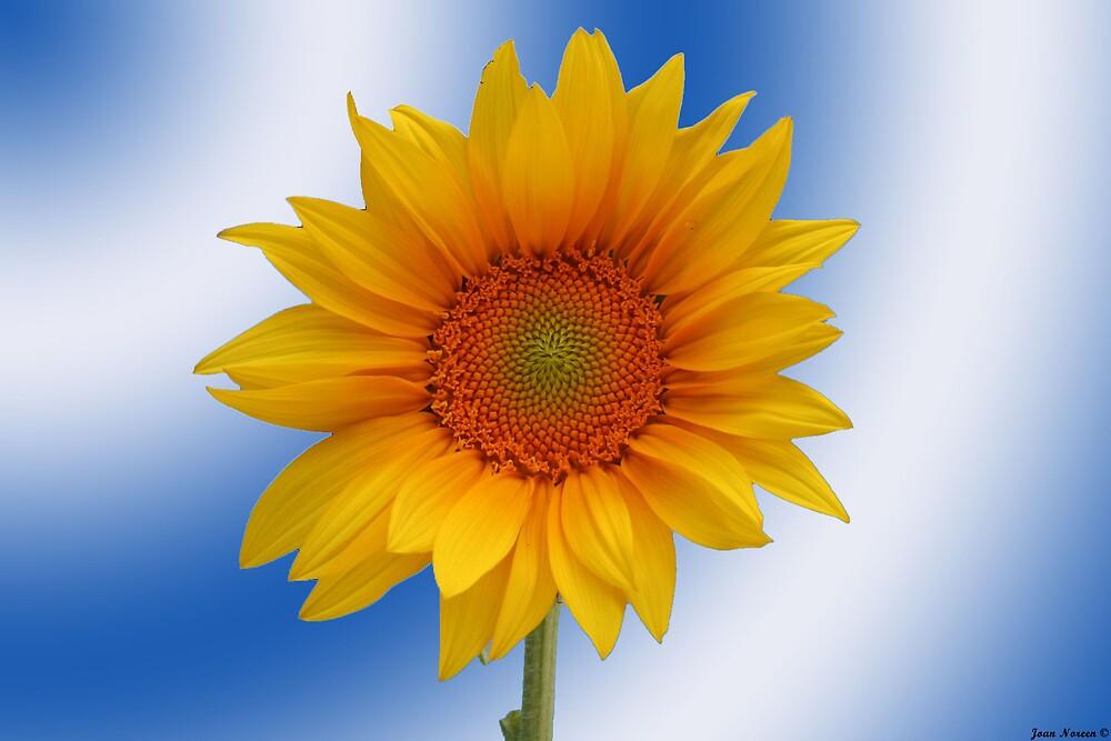 Sunflower by starstaxi