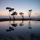 My Dancing Trees _ Beachmere by Barbara Burkhardt