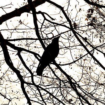 Crow by AmandaBrushett
