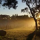 Sunrise over the vines - Adelaide Hills Wine Region- Fleurieu Peninsula. South Australia by MagpieSprings