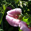Droplet by Northcote Community  Gardens