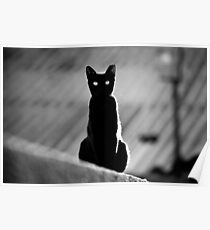 place in the sun for a black cat Poster