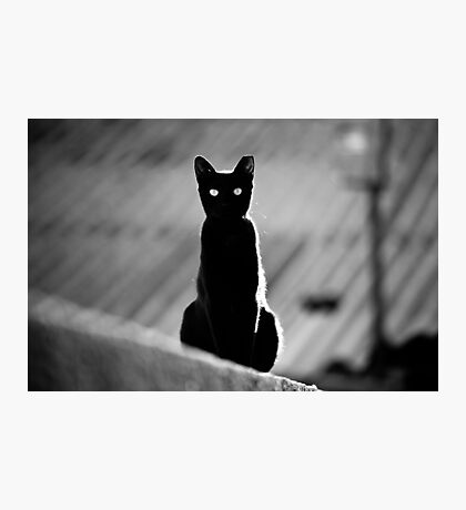 place in the sun for a black cat Photographic Print
