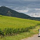 Little White Train in Alsace Wine Route by Yair Karelic