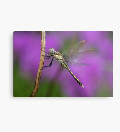 Fairies in my Garden Metal Print