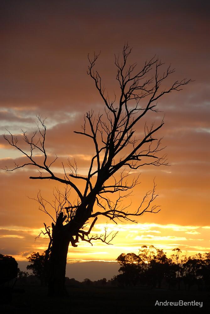 Sunset tree  by AndrewBentley