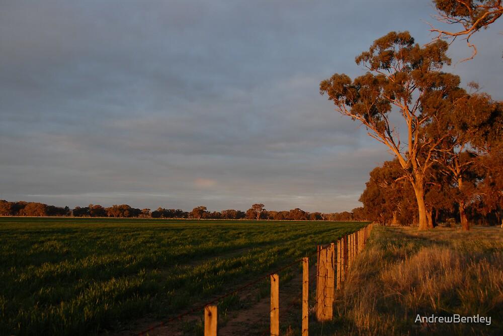 Crop fence by AndrewBentley