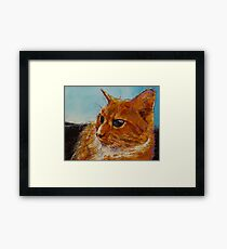 Orange Tabby Cat Framed Print