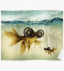Lens Augen Fisch Poster